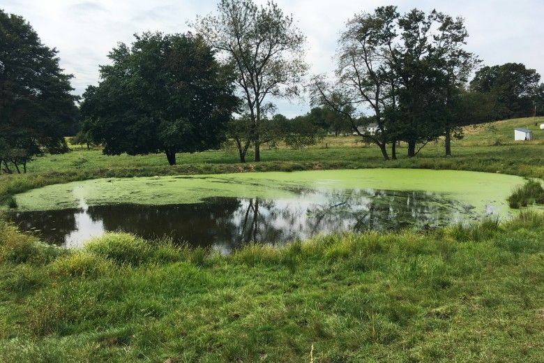 With no vegetation planted around the edge other than grass, a pond is susceptible to excessive surface growth.