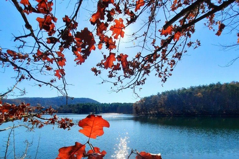 Oak tree leaves. Photo by Melissa Reckner