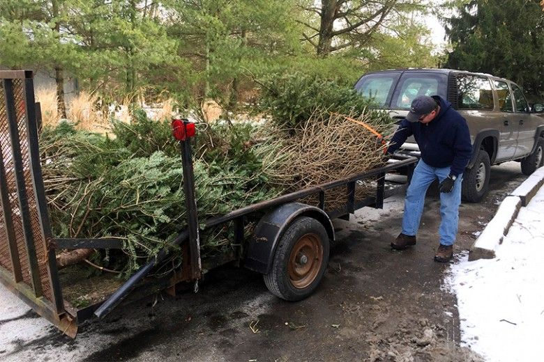 christmas trees in a trailer