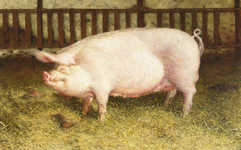 Jamie Wyeth, Portrait of Pig, 1970. Oil on canvas, 52 3/8 x 84 5/8 in. Gift of Betsy James Wyeth, 1984. © Jamie Wyeth / Artists Rights Society (ARS), New York