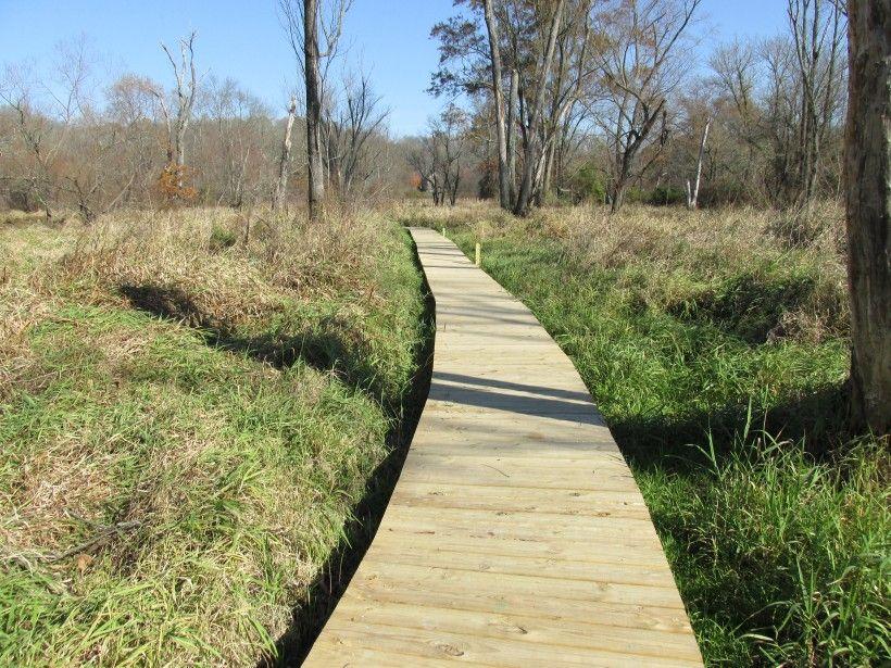 Boardwalk Wetland Trail