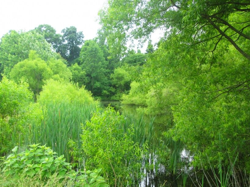 A healthy pond with a thick vegetative buffer.
