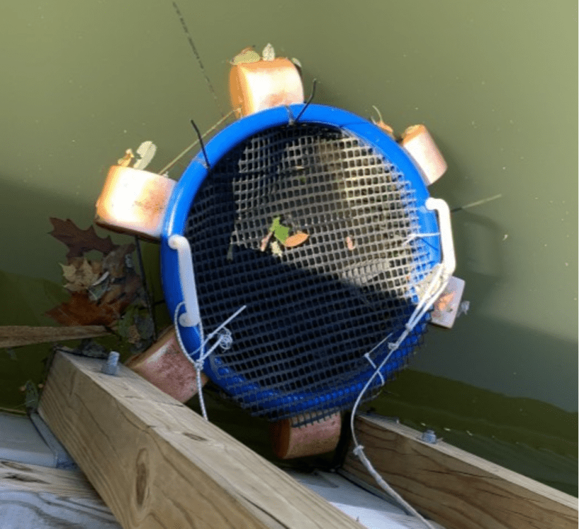 The Discovery Center in Philadelphia is doing one step in the process of growing mussels for the Mussels for Clean Water Initiative. Here, a makeshift cage made out of recycled materials holds a cluster of mussels.
