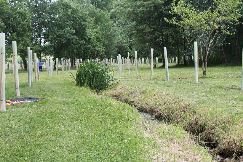 Riparian Buffer Planting