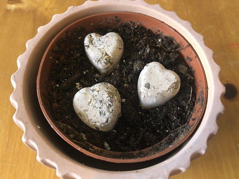 seed bombs step 5