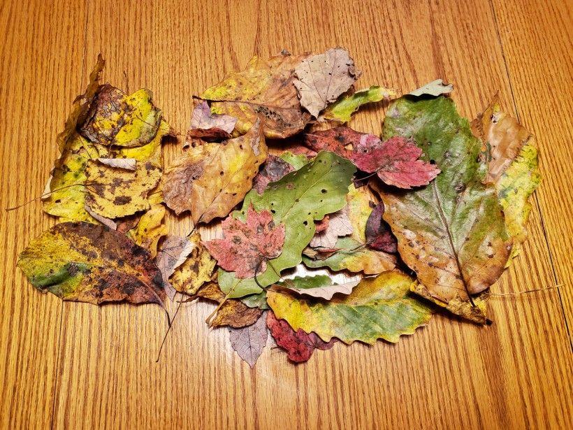 Fall wreath - step 1