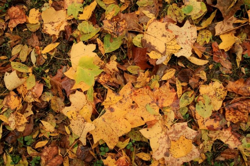 Fall leaves at the Laurels Preserve, land protected by the Brandywine Conservancy
