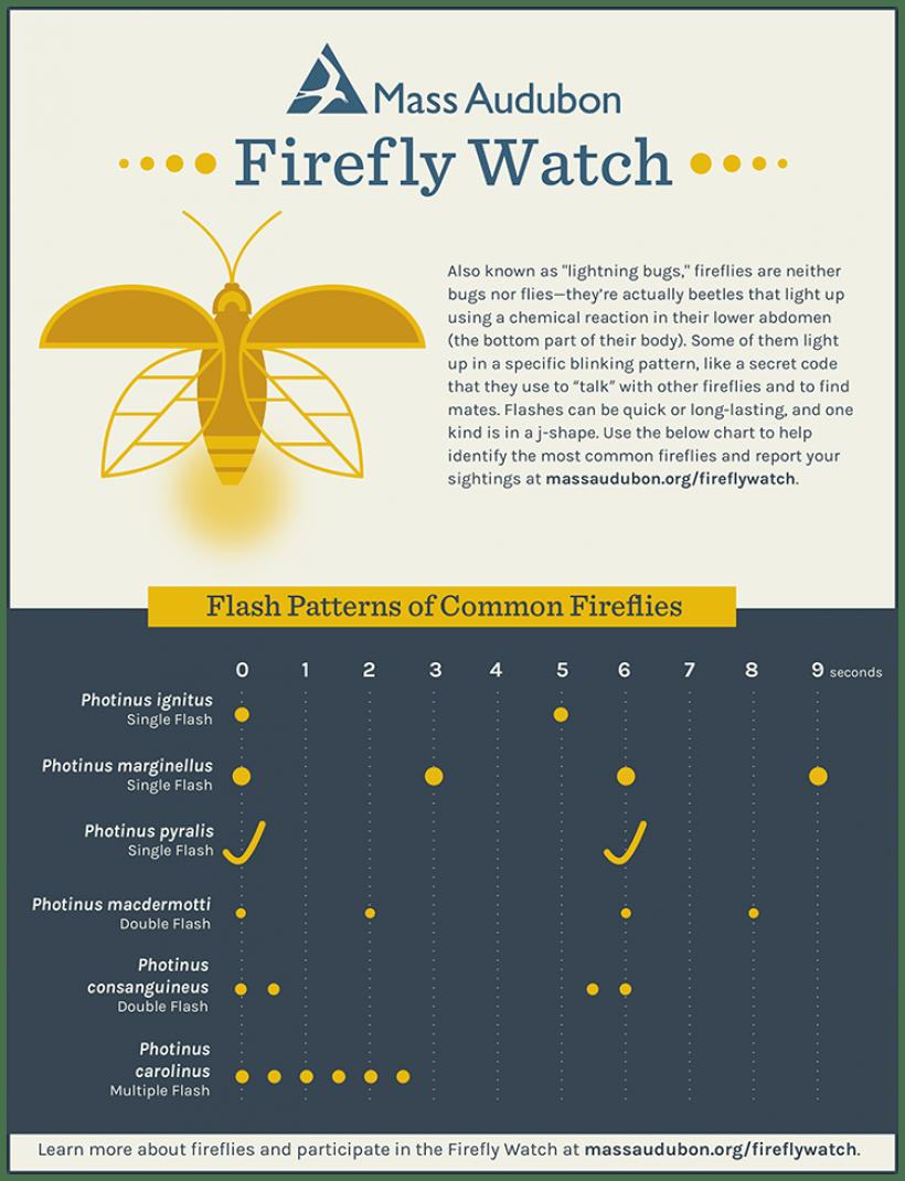 Mass Audubon Firefly Chart