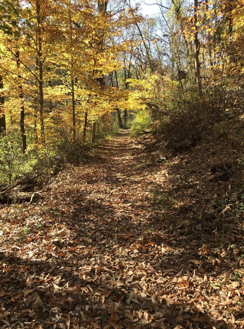 A trail running through the 40 acres of protected lands adjacent to the First State National Historic Park in Delaware