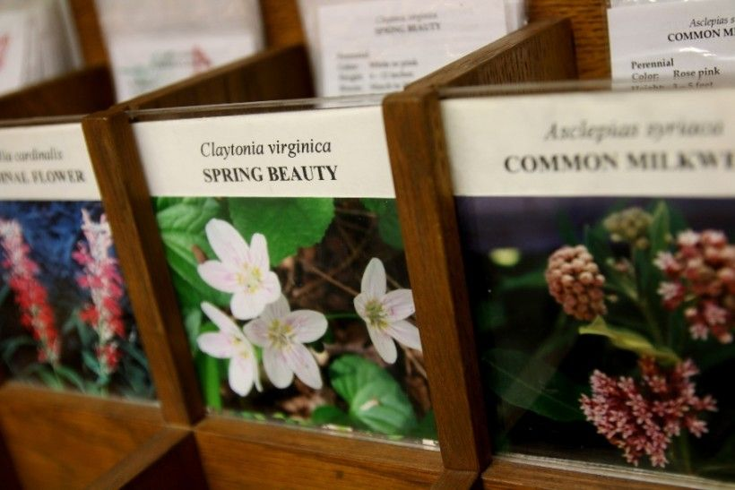 Native plant seeds from the Brandywine Conservancy sold in the Museum Shop