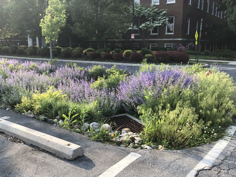 Bioswale in Lancaster City