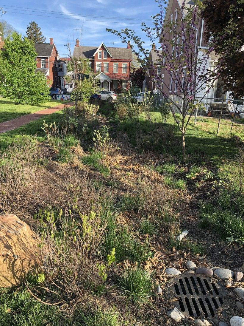 Bioswale in West Chester Borough at Veterans Memorial Park