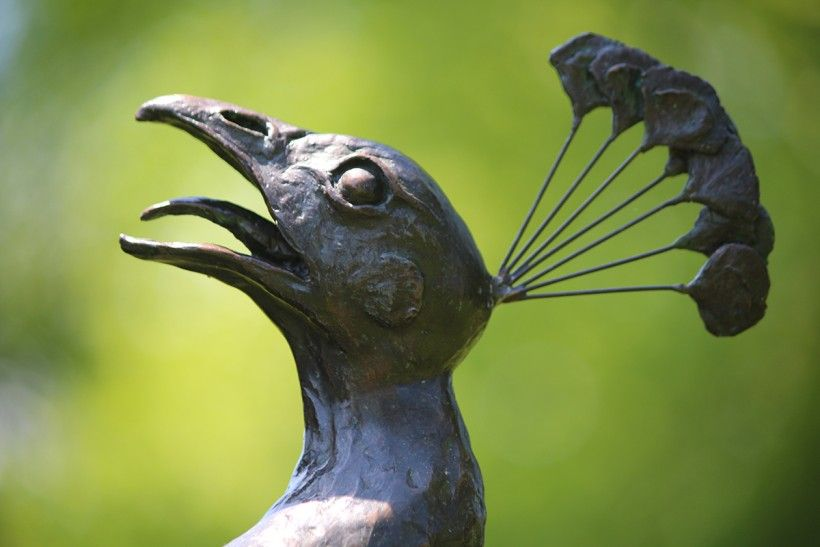 Close up of bronze peacock head, a detail from the Brandywine's new 'Tipping Point' sculpture of two life-size peacocks in mid-air battle