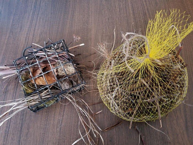 bird nesting