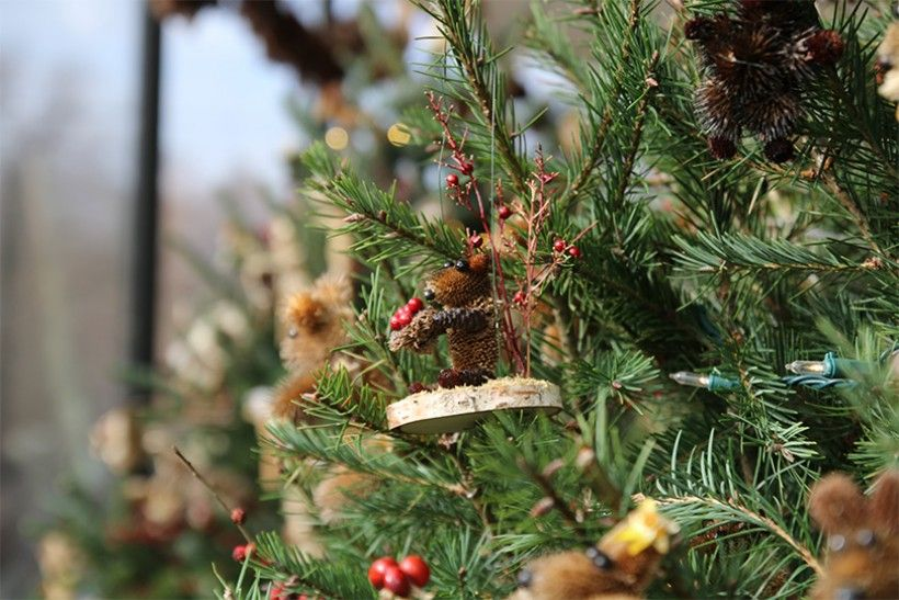 Trees covered in Critter ornaments made by our volunteers at the Brandywine River Museum of Art