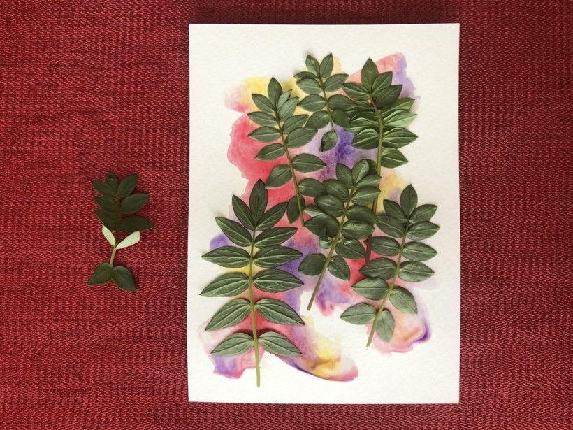 plants on watercolor paper