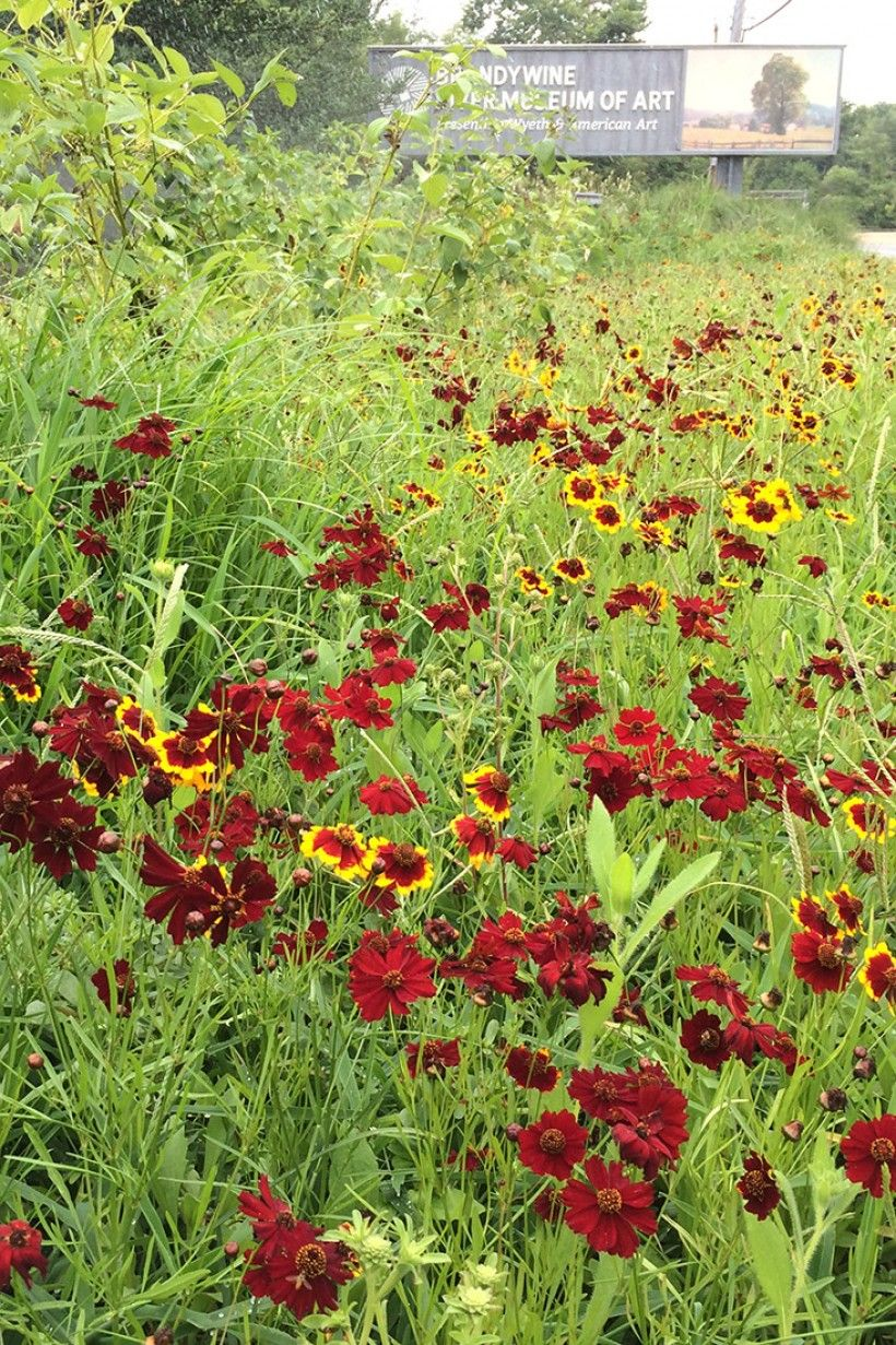 Route 1 garden in bloom