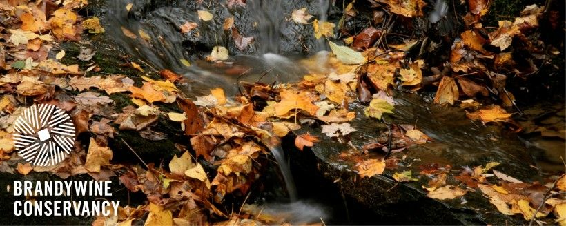 Stream and fall leaves. Photo by Chuck Bowers