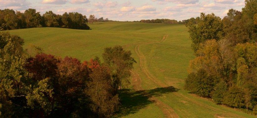 landscape in fall