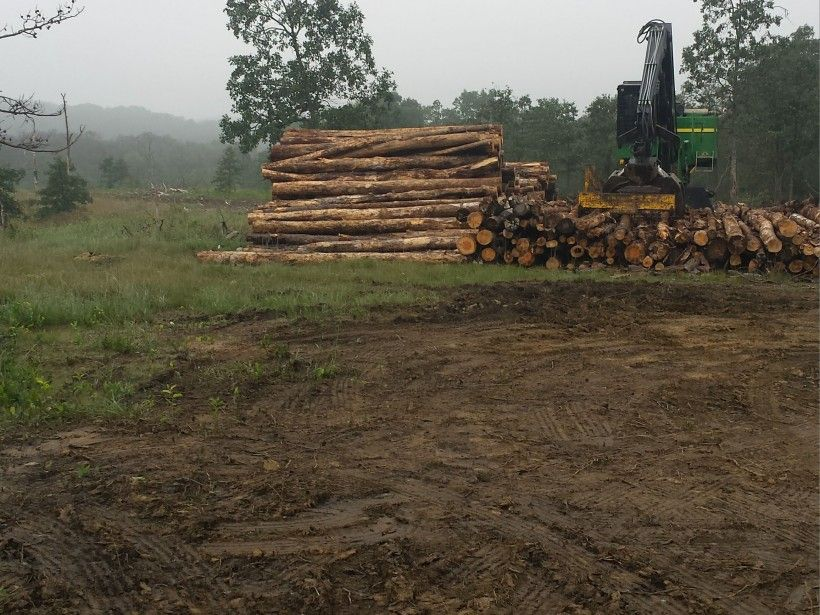 Logging at Nottingham County Park. Photo by Kelly Ford.