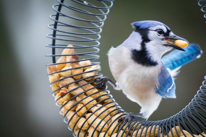 bird on a birdfeeder