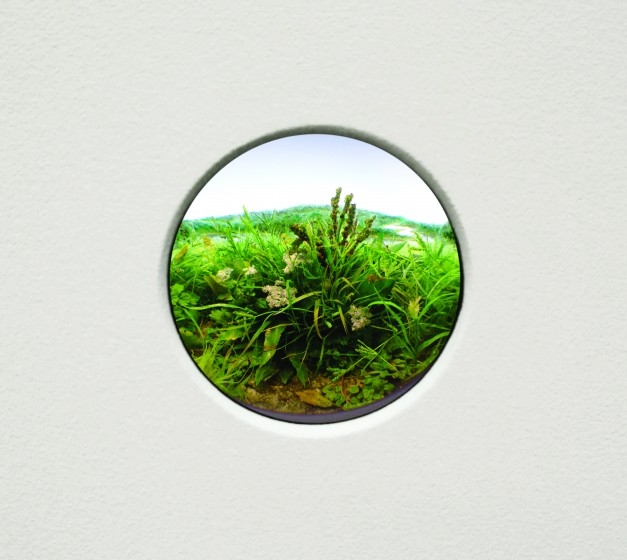 Patrick Jacobs, Weed Study, 2017, Styrene, acrylic, cast neoprene, paper, polyurethane foam, ash, talc, starch, acrylic, vinyl film, wood, steel, lighting, BK7 glass. Diorama viewed through 2 3/4 inch window. Interior box; 14 3/4 x 11 1/4 x 9 1/4 inches.