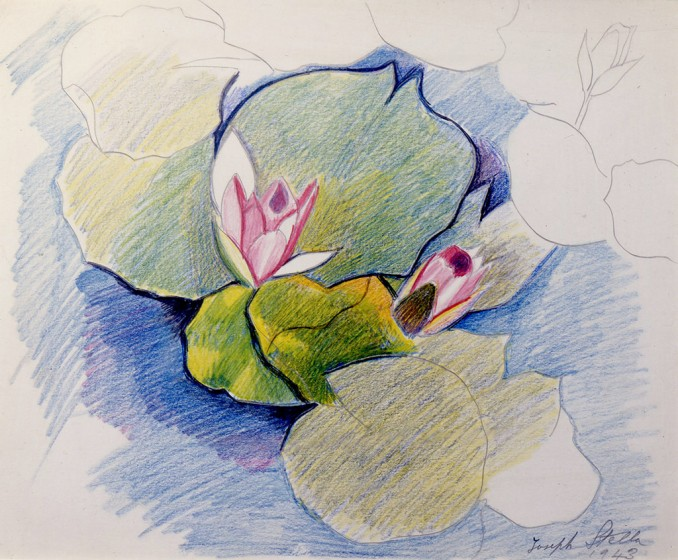 Joseph Stella, Two Pink Waterlilies, 1943. Silverpoint and crayon on paper, 11 x 11 ½ in. Collection of B. Dirr