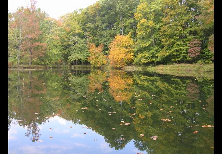 Waterloo Mills Pond in Fall