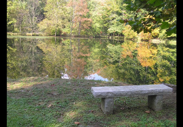 Waterloo Mills Pond With Bench